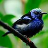 bird_CCC0304