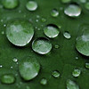 Rainforest leaf with rain drops<br /> <br /> Nature Stock Photography by professional photographer Christina Craft
