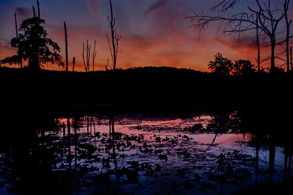Sunset at the Beaver Marsh