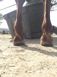 Front Legs
