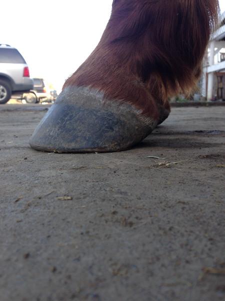 Justice Feet Jan 2015