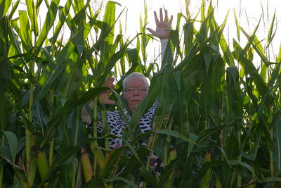 Ed in the cornfield