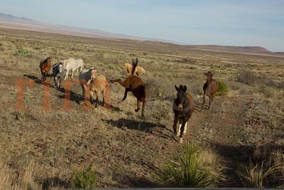 Jill D Miller _K7A2561~horses&mules