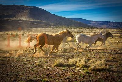 Jill D Miller _K7A2624L~horses running