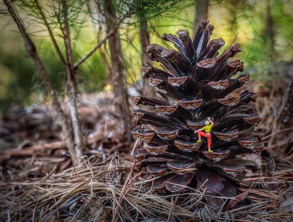 Cone Climbing