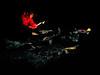 Alain @ the campfire<br /> Parc de la Mauricie<br /> October 14, 1999