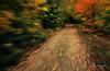 Trail towards Wabinaki<br /> Parc de la Mauricie<br /> September 30, 2014
