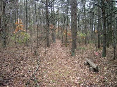 A wooded trail on our acreage