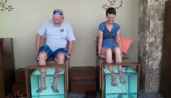 A video of our fishy pedicure