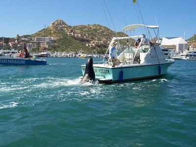 Pancho the sea lion