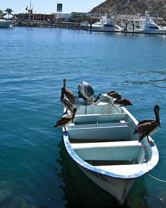 Cabo San Lucas 4-2008 Card 1 142