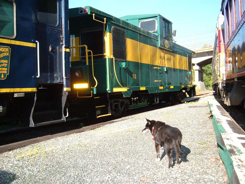 Reagan The Dog heads for the caboose where her meal awaits.