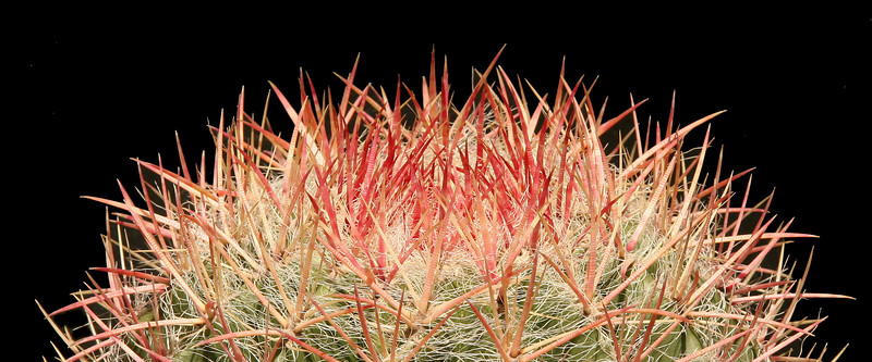Ferocactus pilosus ssp pilosus ... I'm going to blow this one up for a wall mural !!  What a horizon.