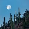 Beaver Moon Rising - Digital Art