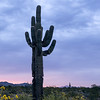 Dos Cactus Sunrise