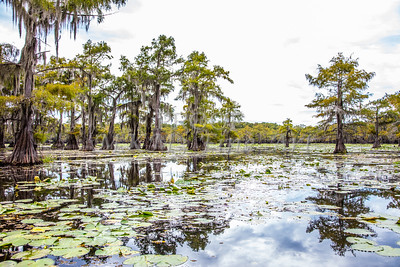 320 .1861 Caddo Lake in Color
