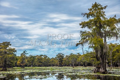 314 .1861 Caddo Lake in Color
