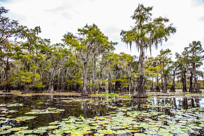 322 .1861 Caddo Lake in Color