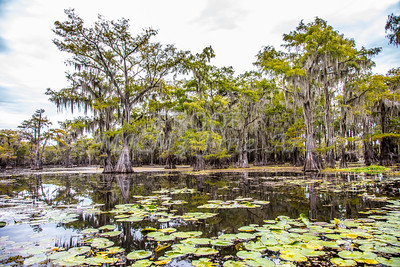 323 .1861 Caddo Lake in Color