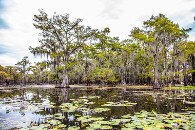 324 .1861 Caddo Lake in Color
