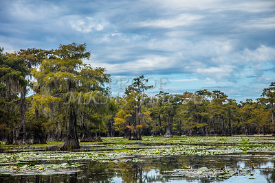 315 .1861 Caddo Lake in Color