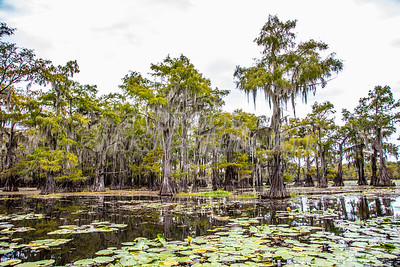 321 .1861 Caddo Lake in Color