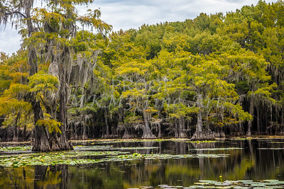 316 .1861 Caddo Lake in Color
