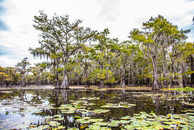 325 .1861 Caddo Lake in Color