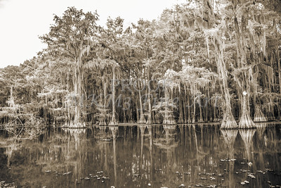 745 .1861 Caddo Lake in Black adn White
