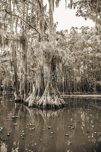 733 .1861 Caddo Lake in Black adn White