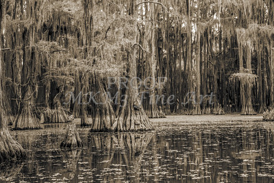 734 .1861 Caddo Lake in Black adn White