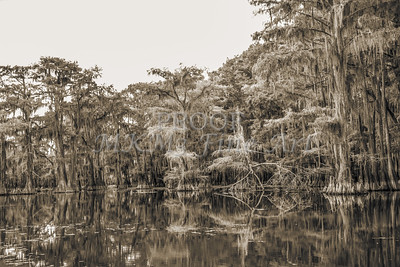 743 .1861 Caddo Lake in Black adn White