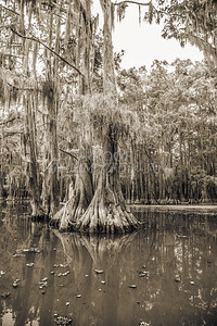 732 .1861 Caddo Lake in Black adn White