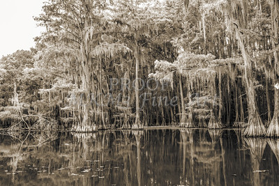 744 .1861 Caddo Lake in Black adn White