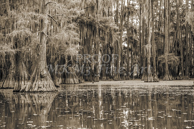 742 .1861 Caddo Lake in Black adn White