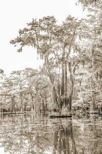 739 .1861 Caddo Lake in Black adn White
