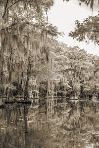 741 .1861 Caddo Lake in Black adn White