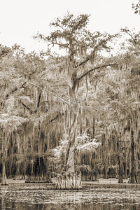 737 .1861 Caddo Lake in Black adn White