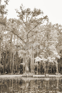 738 .1861 Caddo Lake in Black adn White