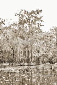 740 .1861 Caddo Lake in Black adn White