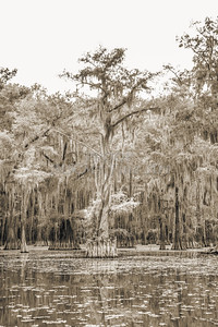 736 .1861 Caddo Lake in Black adn White
