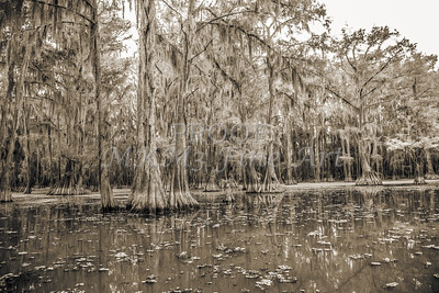 735 .1861 Caddo Lake in Black adn White