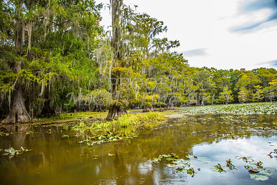 126 .1861 Caddo Lake in Color