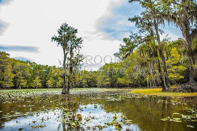 125 .1861 Caddo Lake in Color