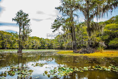124 .1861 Caddo Lake in Color