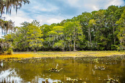 122 .1861 Caddo Lake in Color