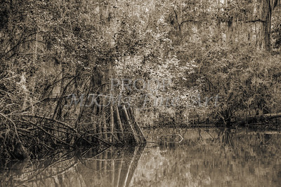 597 .1861 Caddo Lake in Black adn White