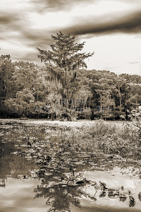 608 .1861 Caddo Lake in Black adn White