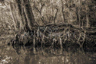 604 .1861 Caddo Lake in Black adn White