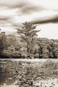 610 .1861 Caddo Lake in Black adn White